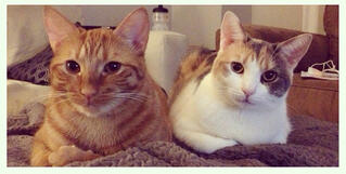 Oink and Pearl, Ben Robinson's cats